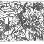 Два пиона, бумага/офорт, С4, 11,5см x 16см 2015 г.