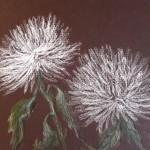 Две хризантемы, бумага, пастель, 18 х 24, 2018.