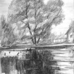 «Ива у воды», бумага/ карандаш, 29,5 х 41, 2018 г.