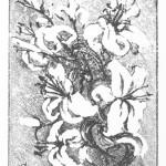 Лилии, бумага/ литография, L, 15, 5 х 12, 2014 г.