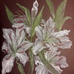 Лилии цветут, бумага, пастель, 30 х 24, 2018.
