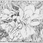 Белый пион, бумага/офорт, С4, 12см x 15см 2015 г.