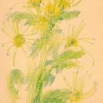 """Хризантема"", масляная пастель, 19 х 27, 2003 год."